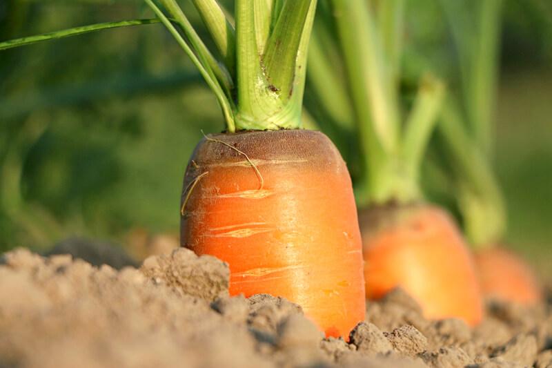 人参の栄養素と効果